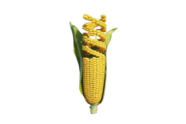 GMO vs Non GMO 2