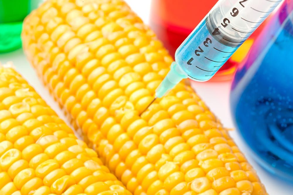 GMO Maize and Soy South Africa