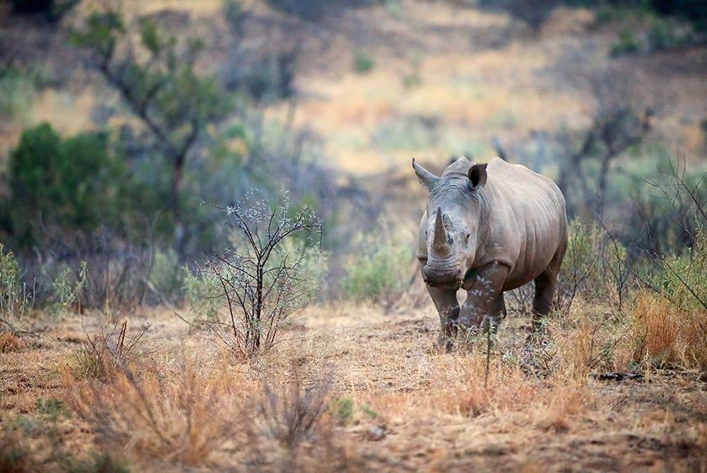 Power Supply Anti Poaching