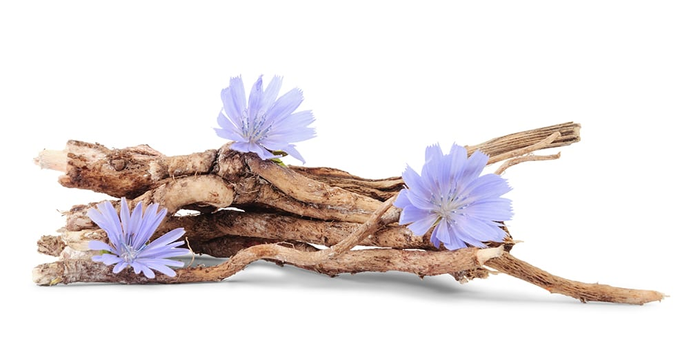 Chicory Roots - Inulin A Prebiotic Fibre With Powerful Health Benefits
